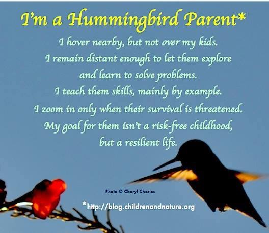 Hummingbird Parent